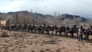 20 mule team hitched to new Borax wagons