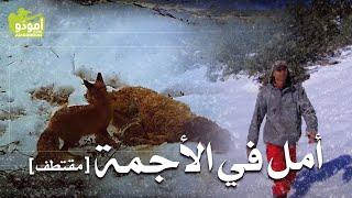 أمل في الأجمة [ مقتطف ] / أمودّو م 11 ح 164