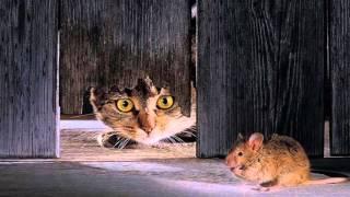 Minnie Petite Souris - Henri Salvador
