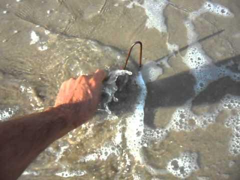 cangrejo pesca doradas