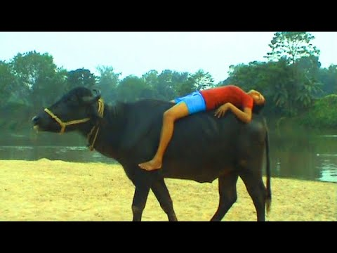Girl stunt with Buffalo You will be amazed after watching this video