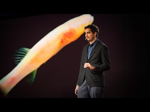 Clues to prehistoric times, found in blind cavefish | Prosanta Chakrabarty