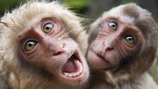Funny Monkeys 2017 🙈 🙉 🐒 [Funny Pets]