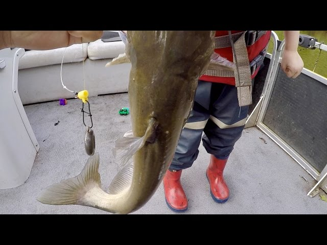 How to Catch BIG Catfish  - Baits, Rigging, Cast Net Tutorial, and Location (ft. Catfish and Carp)