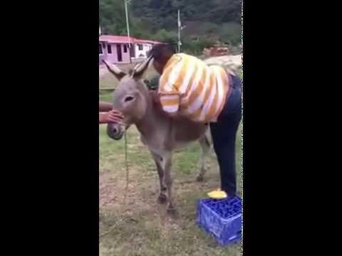 Donkey prank