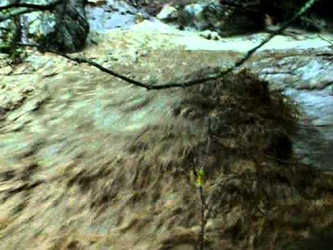Mandalar Water Buffalos Yamaç Köyü Yenice Karabük