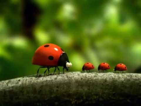 Vida de insetos