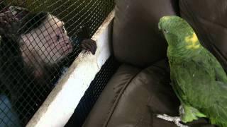Monkey VS Bird