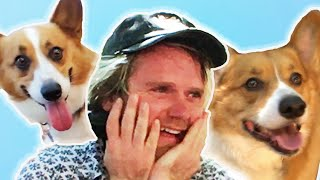 Dog Lovers Get Surprised By 70 Corgis