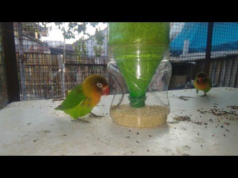 Wadah pakan buat burung dari botol dan kaleng