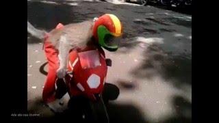 Atraksi Topeng Monyet Lucu - From Indonesia