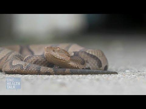 A Venomous Snake Just Bit You Now What