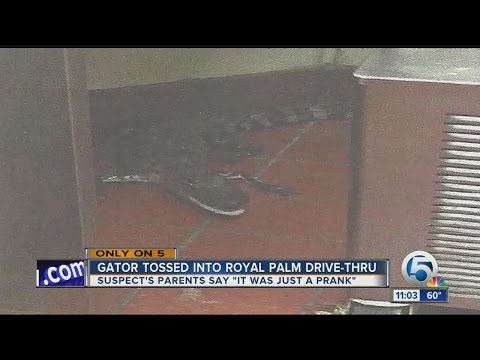 Alligator tossed into Royal Palm Beach Wendy s drive thru window