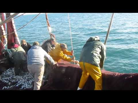 Calayri chlihat 08 01 2013 plage mehdiya peche sardine