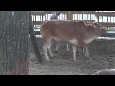 Xxx Mp4 Donkey Sex Cow Seen 3gp Sex