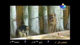 مركز تدريب كلاب الحراسة   شاهد  و استمتع