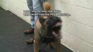 Dog Training - How to train dogs for Real Protection. Must See! (k9-1.com)