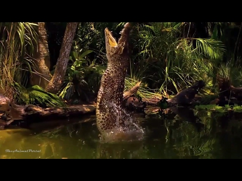 Amazing Animals Hidden Deep in the Jungle Nature Documentary 2017