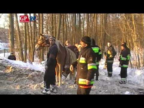 Konie wpadły do Słupi. Strażacy uratowali trzy. Czwartego porwał nurt