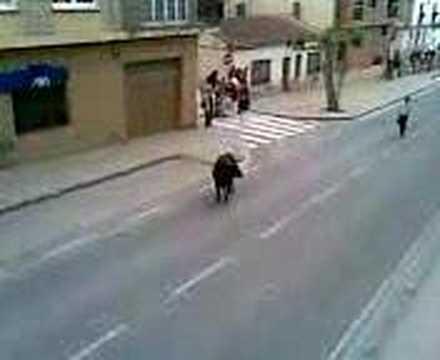 Torada nas ruas de Alfaro