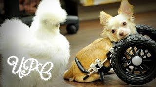 ADORABLE CHICKEN AND DOG COUPLE WILL GIVE YOU ALL THE FEELS