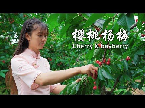 6月初夏又到了杨梅挂满枝头的时节,酸酸甜甜是我最喜欢的味道,顺便摘点樱桃一起酿酒,太美了 Make wine with bayberries and cherries 【杨大碗】