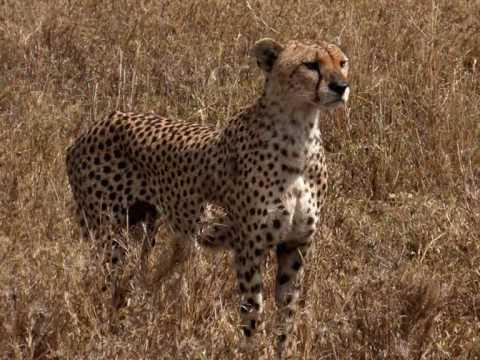 Africa Selvagem