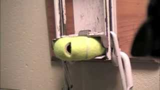 The Tennis Ball Miracle.