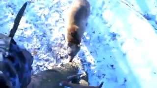 Сходили на рыбалку, а тут медведь - опаньки....