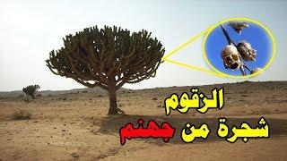 شجرة من جهنم موجوده معنا على الارض فما هي ؟
