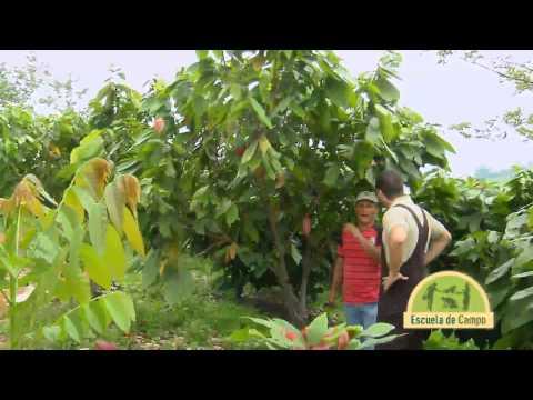 Escuela de Campo Cultivo y manejo de Cacao Mayo 22 de 2013