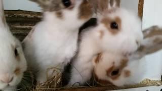 Eenie, Meenie, Minee & Mo baby bunnies