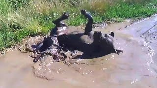 """""""Dogs Playing in Mud Compilation"""" 