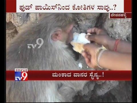 Monkeys Allegedly Poisoned Or Die of Food Poisoning in Devanahalli