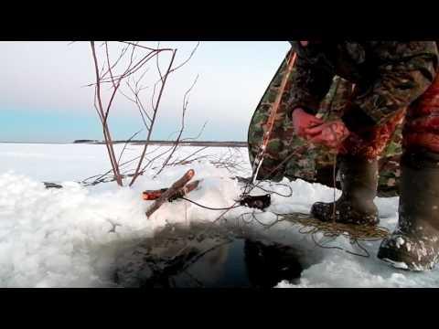 видео ловля налима на дону