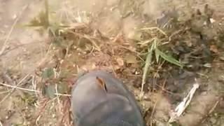 Uma borboleta pousa na bota de um socorrista em Mariana, veja o desenho na asa dela.