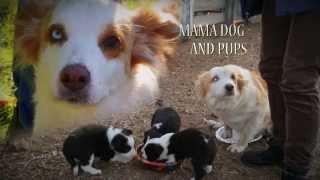 Animal House Full Episode #1