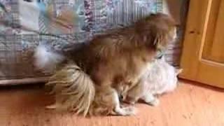 dog humps pussy cat