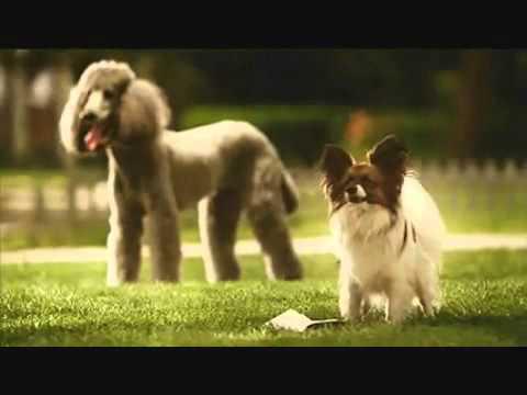 Xxx Mp4 Sexy Dog Jaw Dropper Ad ♥ Mp4 3gp Sex