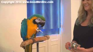 Training a Macaw with Paper Towels