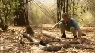 Giant King Cobra of kerala.flv