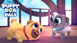 New Series!   Puppy Dog Pals   Disney Junior