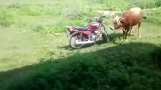Funny Kenyan clips
