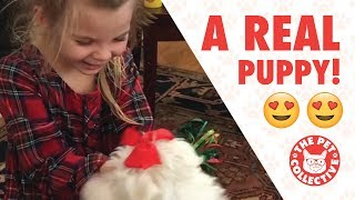 Best Gift Ever   People Getting Surprised With Puppies