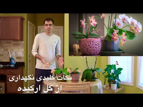 Xxx Mp4 طریقه نگهداری از گل ارکیده 3gp Sex