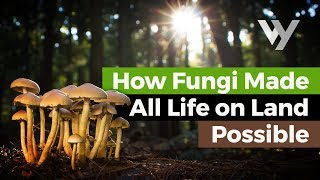 How Fungi Made All Life on Land Possible