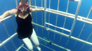 Shark Cage Dive Hawaii North Shore HD