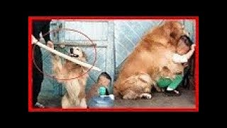 كلاب أنقذت حياة البشر.. لو لم تصورهم الكاميرات لما صدقهم أحد !!