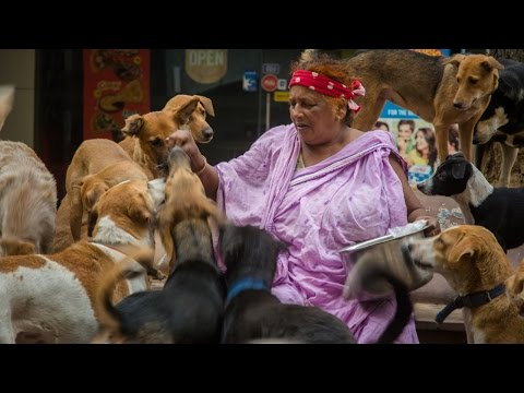 Xxx Mp4 Puppy Love The 39 Dog Lady Of New Delhi' Cares For 400 Strays 3gp Sex