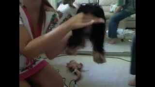 Shaving Violet's bum